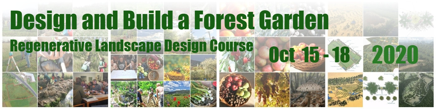Design and Build a Forest Garden